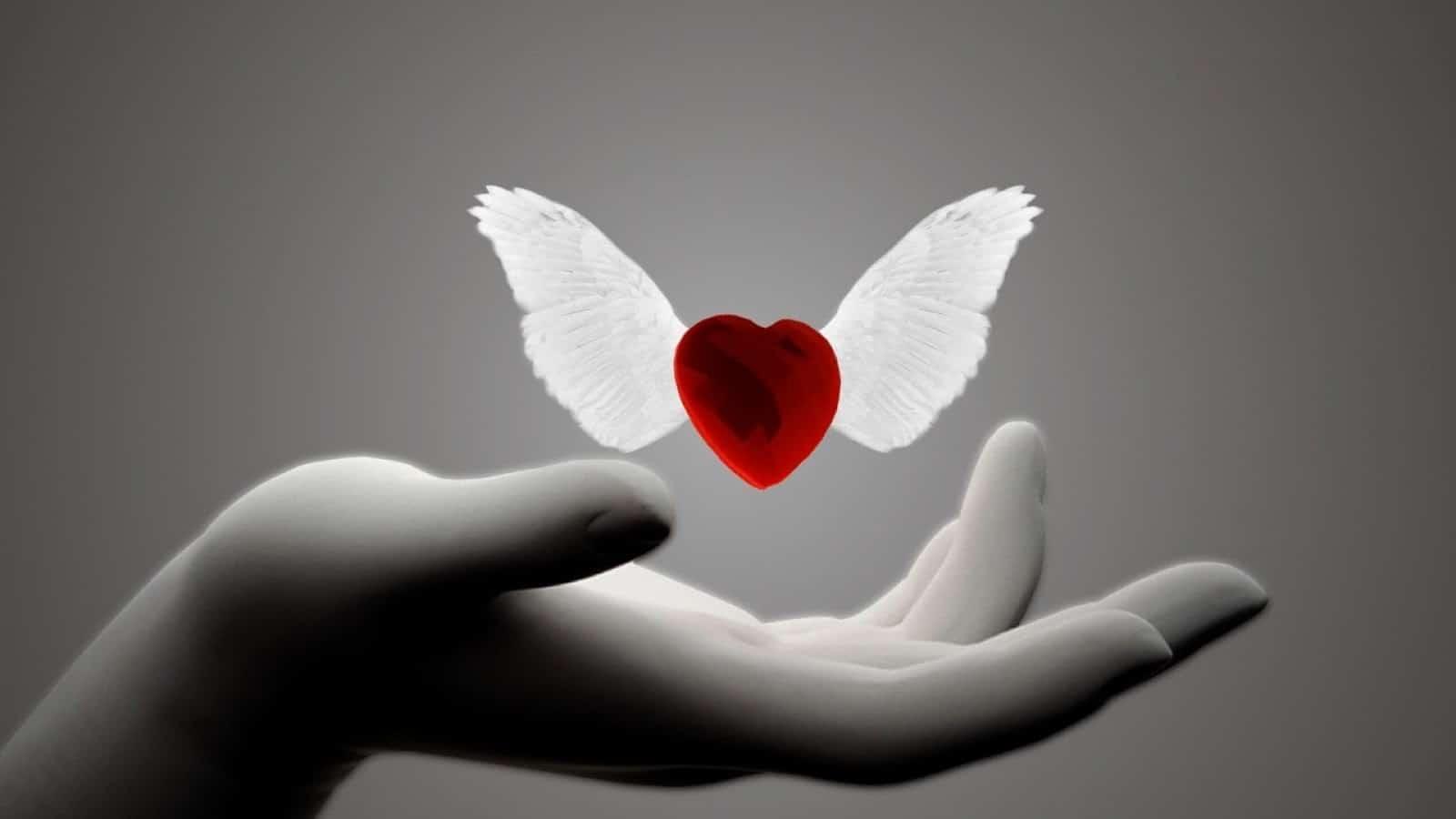 ما هي انواع الحب الموجودة في حياتنا اليومية